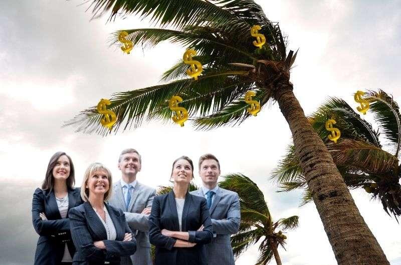investors under palm tree