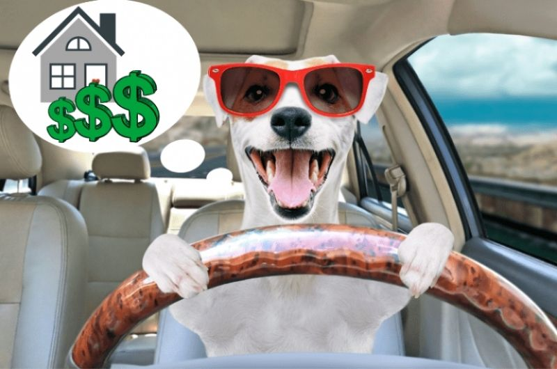 dog driving in a car thinking about a house